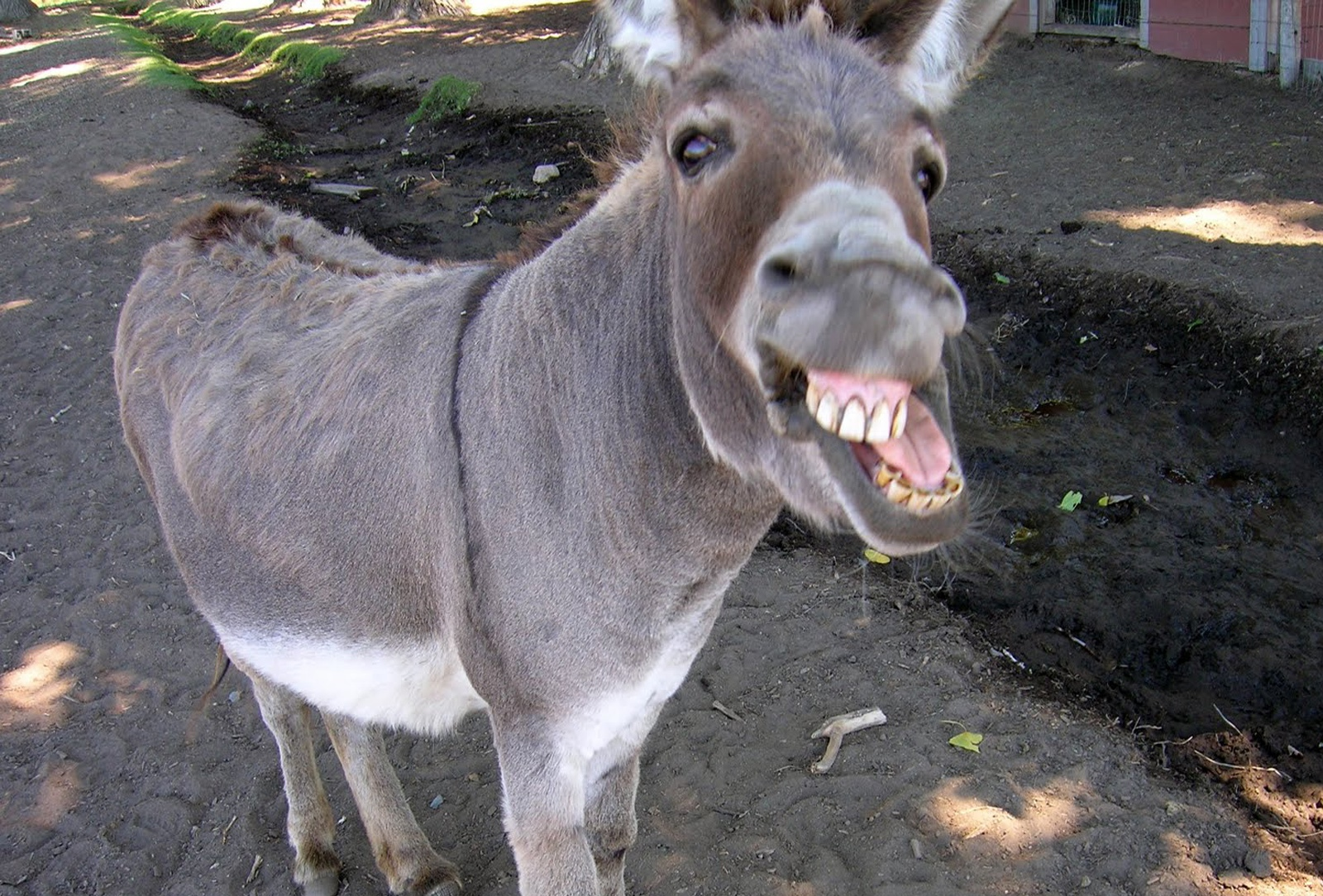 OMG: Admit Card issued to donkey in Kashmir valley!