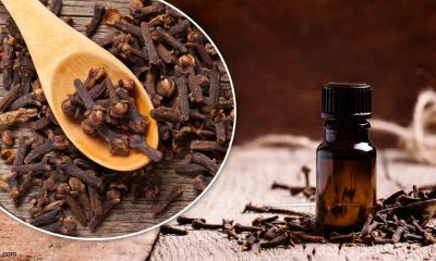 Clove, Indian Food, Benefits of Clove, Smell of clove, Taste of Clove, Clove is antioxidant, Clove is antibacterial, Benefits of cloves, Health news, Lifestyle news, Acne, Sinus, Morning Sickness, Increased Immunity, Offbeat news