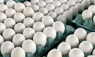 Onion, Tomatoes, Eggs, Eggs prices, Cost of Eggs, Wholesale prices of Eggs, Poultry Federation of India President, Business news