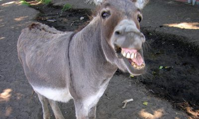 Admit Card issued to donkey, Krihun Khar,J&K exams, Donkey admit card, Donkey giving exam, Donkey, Cow giving exam, Cow, Cow admit card, Jammu Kashmir, Jammu, Kashmir, Jammu and Kashmir