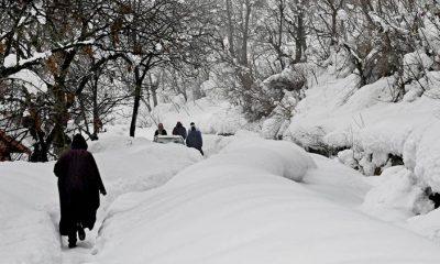 Winter, Cold, Snowfall, Rains, Himanchal Pradesh, North India, National news