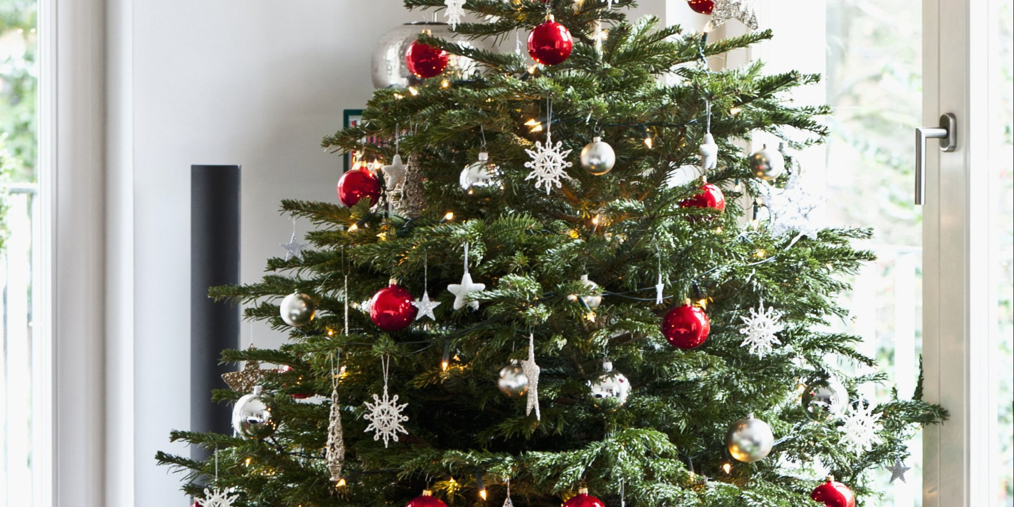 Christmas Tree In India.Pine Needles Of Christmas Tree Could Be Used To Paint Your