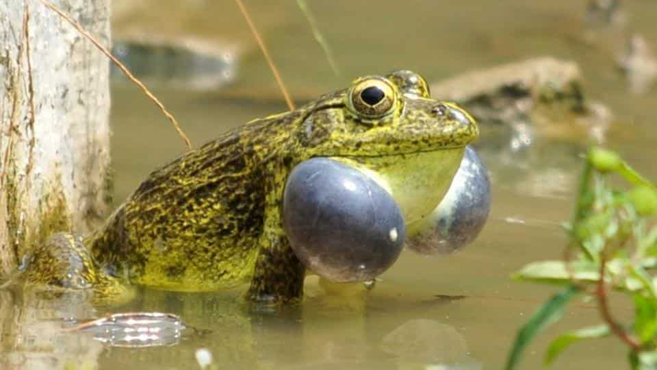 Frog skin, Bacteria, Fungal infections, Humans, Health news, Lifestyle news