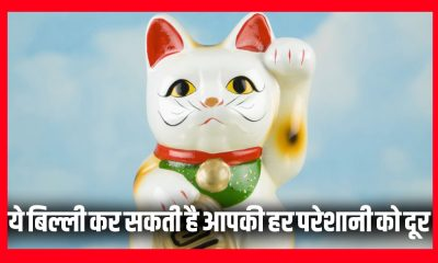 Vastu, Fengshui, Fengshui tips, Cat, Fengshui cat, Business, Golden cat, Directions, Blue Cat